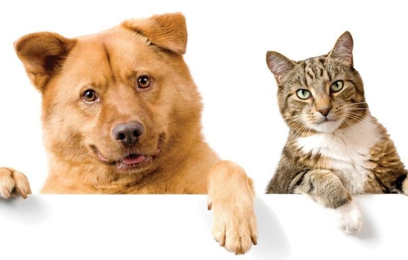 สัตวแพทย์แนะนำให้เจ้าของสัตว์เลี้ยงระมัดระวัง
