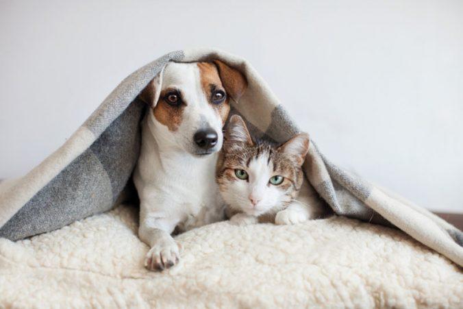 โรคร้ายเสี่ยงตายของสัตว์เลี้ยง คนรักสุนัขและแมวต้องอ่าน